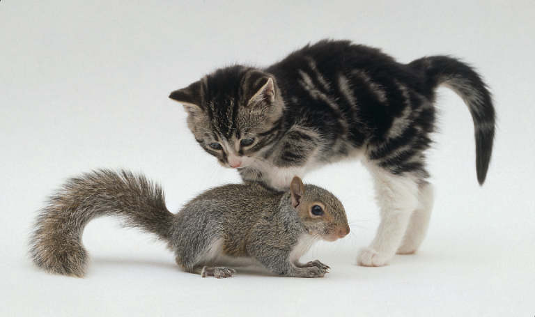 [squirrel-kitten-2.JPG]
