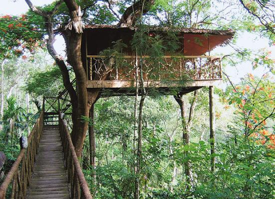 tree house hotel. the Tree House with a