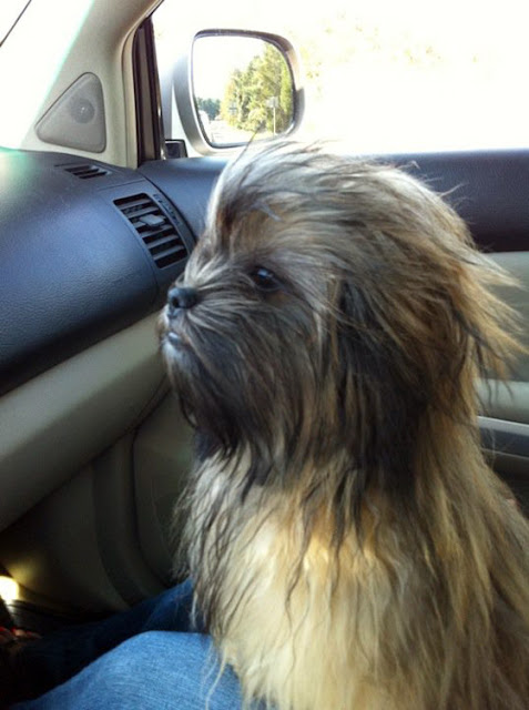 Cool Wookie Dog - Punch it Chewie Seen  On www.coolpicturegallery.us