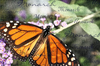 Monarch - beautiful flowers ( photoforu.blogspot.com )
