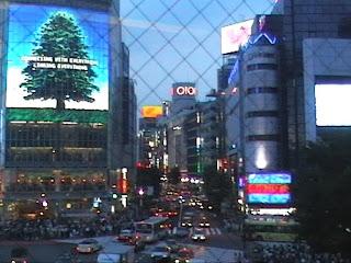 shibuya by night, tokyo
