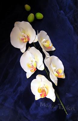 Phalaenopsis aus Zuckerpaste