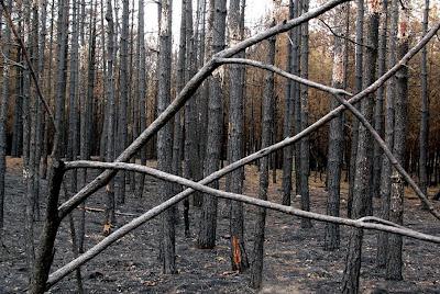 5 weken na de brand in lierop