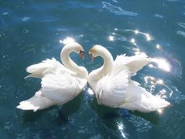 Mercè y el amor...