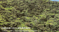 [International Petition]  Stop US helipad plan in Okinawa to save great nature