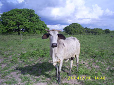Projeto Fundo Rotativo Apoiará projeto de Bovinocultura