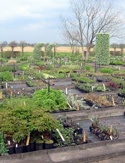 Piet Oudolf: Dutch Plantsman and Designer