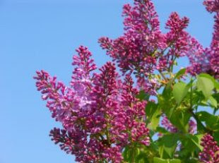 When to Prune Flowering Shrubs