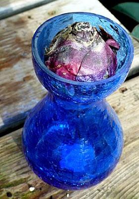Forcing vase
