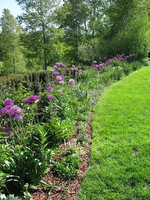 Allium Bulbs to Plant in Fall Gardeners Journal