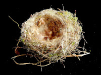 Bird's nest - 3rd February 2008