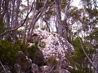 The 'pinnacle' of White Timber Mountain