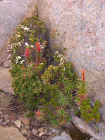 Wildflowers growing in rocks