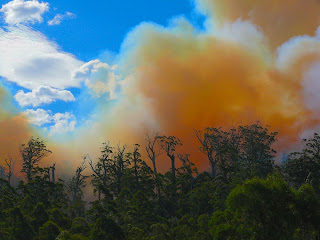 Forestry burn close by along Arve Rd - 9 April 2007