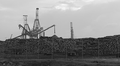 Pine logs on Burnie wharf - 31 May 2007