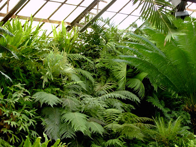 Fern house plants