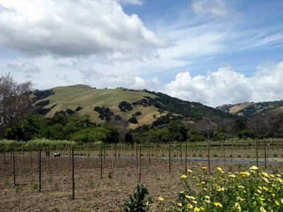 Photo of Baia Nicchia Farm in Sunol, California