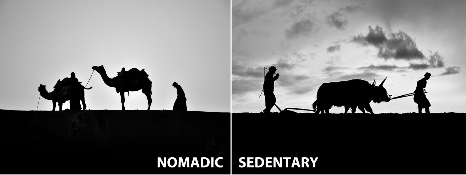 nomadic and sedentary Vital statistics on pastoral nomadic and sedentarizing nomadic societies are by- and-large  birth rate death rate natural increase rate nomad sedentary.