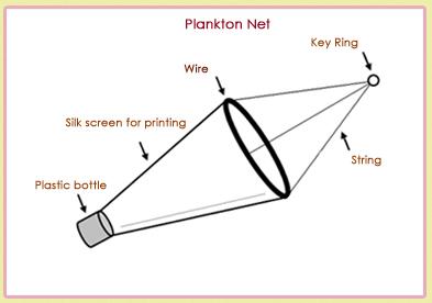 how to make a tadpole net