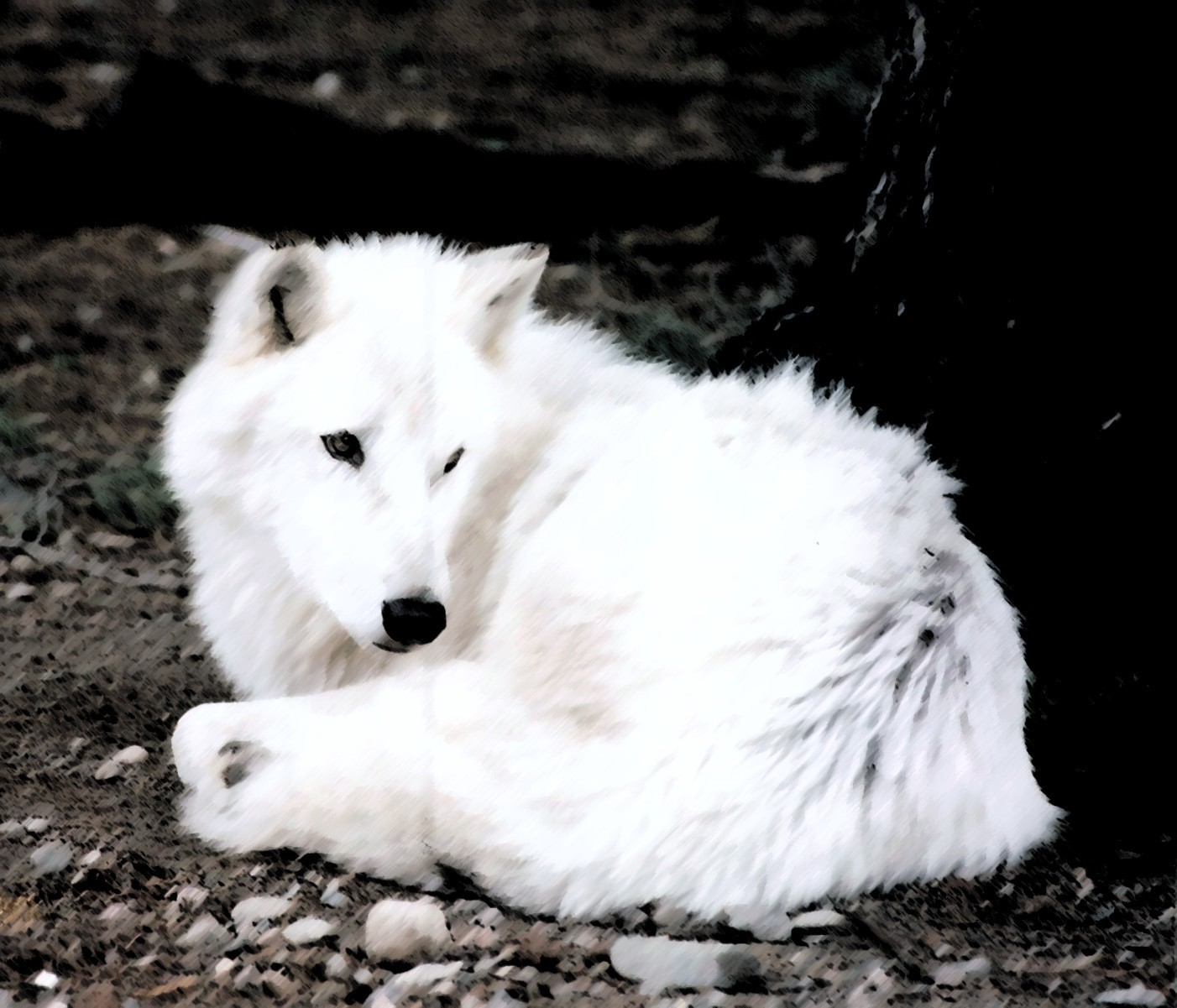 Frost hunter shes a beautiful white wolf hses wfit and caring she