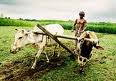 AGRICULTURE IS A BACKBONE OF INDIAN ECONOMY.  This place provide agricultural knowledge.