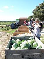 ヴィルタン収穫農園