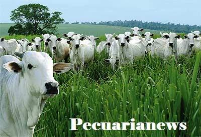 Pecuária news
