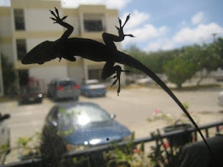 gecko on the window
