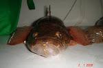 wild river fish