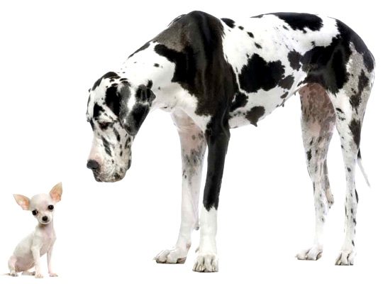 breeds of dogs. reeds of dogs. are a giant