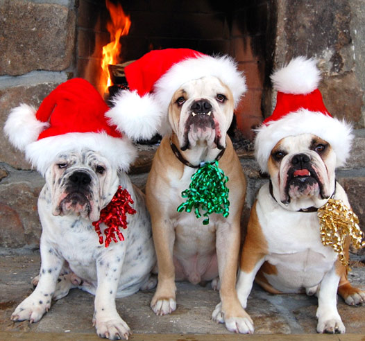 Image result for pets holiday