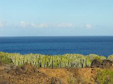 Malpaís de Güímar. Tenerife