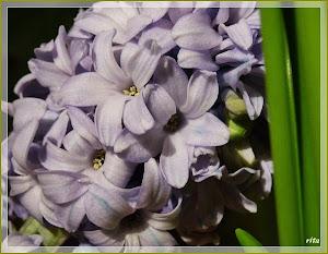 die Blumen-Welt