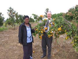Tangarine Orchard