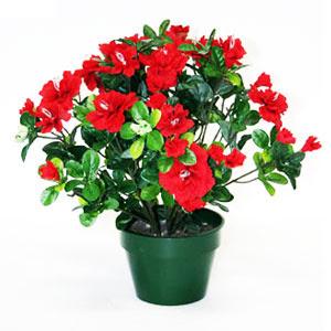 Flori Ghiveci
