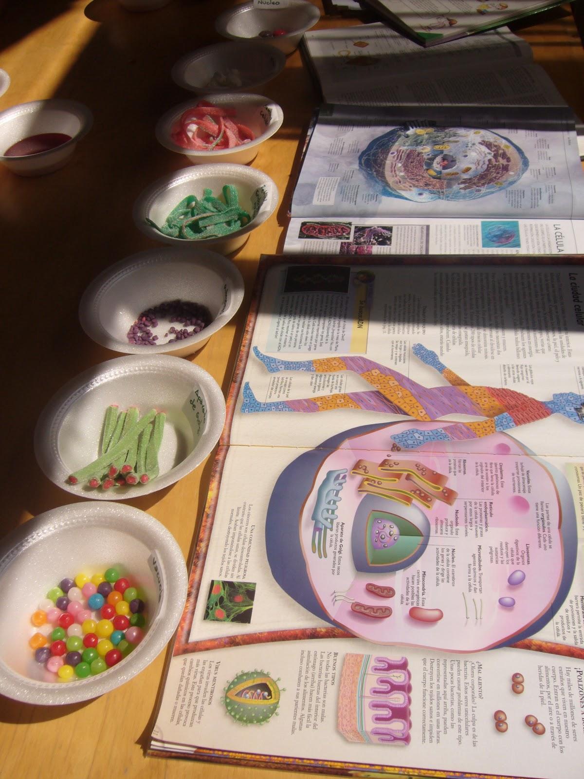 Grandes, medianos y pequeños: Estudiando la célula