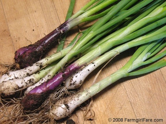 Farmgirl Fare Wanted Your Favorite Recipes Ways To Use Green Onions Scallions,Fried Green Tomatoes Book