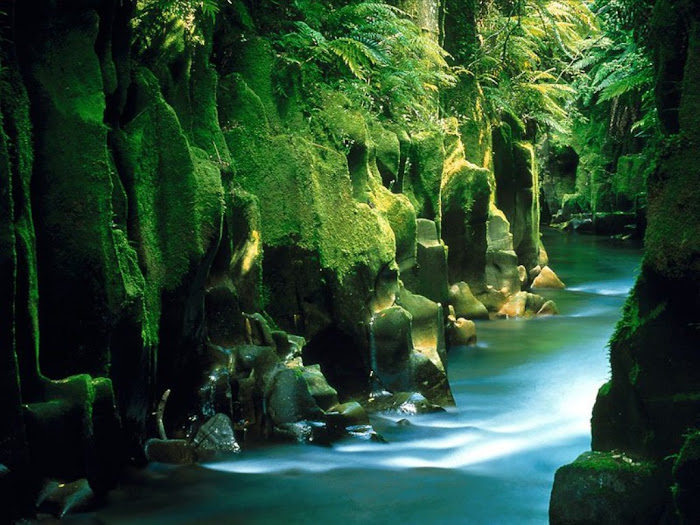 The River at Rain Forest