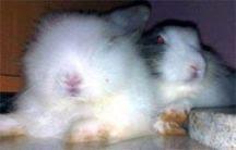 Fluffy Dalam Kenangan
