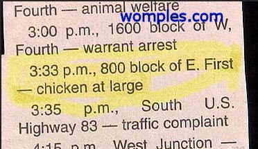 really funny cop stories news chicken on the run