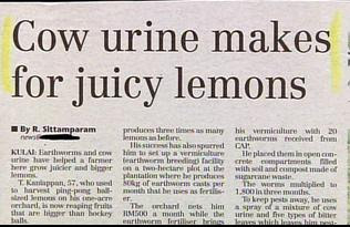 funny newspaper headlines cow urine makes for juciy lemons