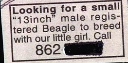 funny ad classifieds for male breeding dog for beagle girl 13 inches