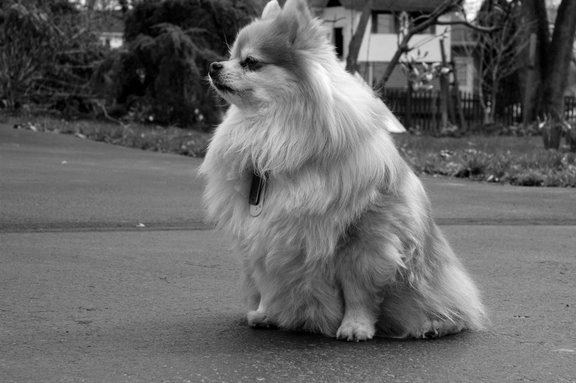 [dog2]