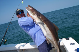 Light Tackle Giant Cobia
