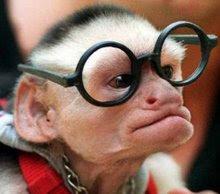 PROFESSOR DARWIN