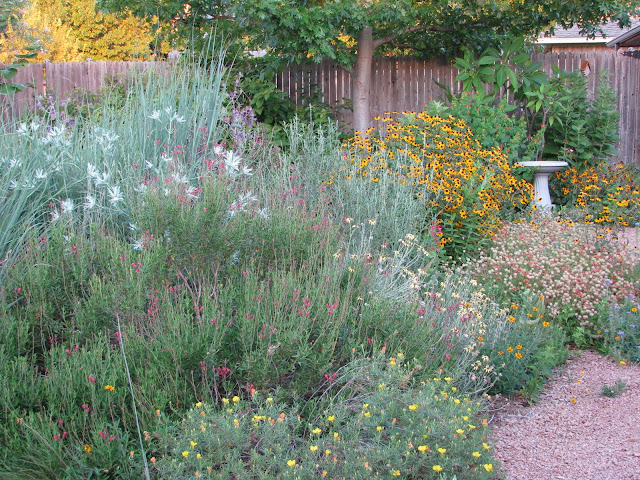 Plano prairie garden welcome to the plano prairie garden for Prairie style garden design