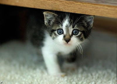 cutest kitten