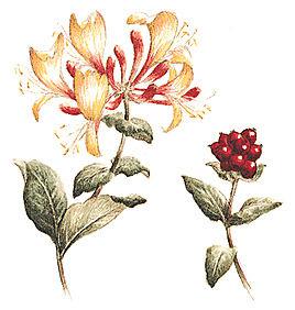 16 Jenis Buah Berry dan Khasiatnya