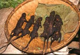 tikus bakar