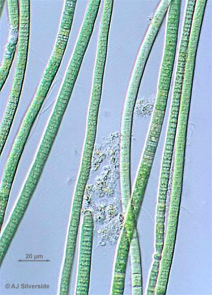 biol 1010 lab 24 part 2